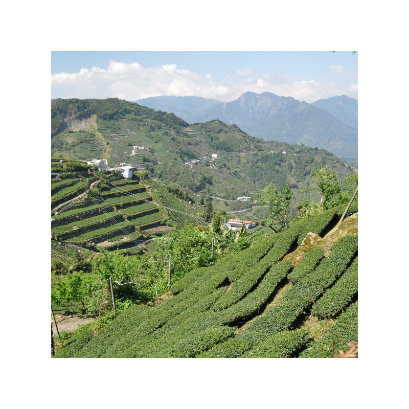 The TeaMasters gift box of Alishan Oolongs