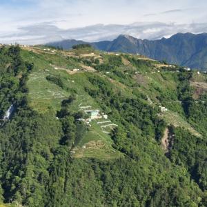 2016 Spring Top Qingxin Oolong Lishan