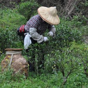 2018 Spring Rougui Baozhong