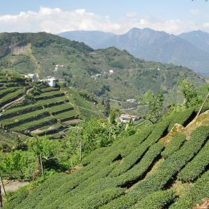 La boite cadeau TeaMasters des Oolongs d'Alishan